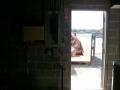 back-door-through-shot